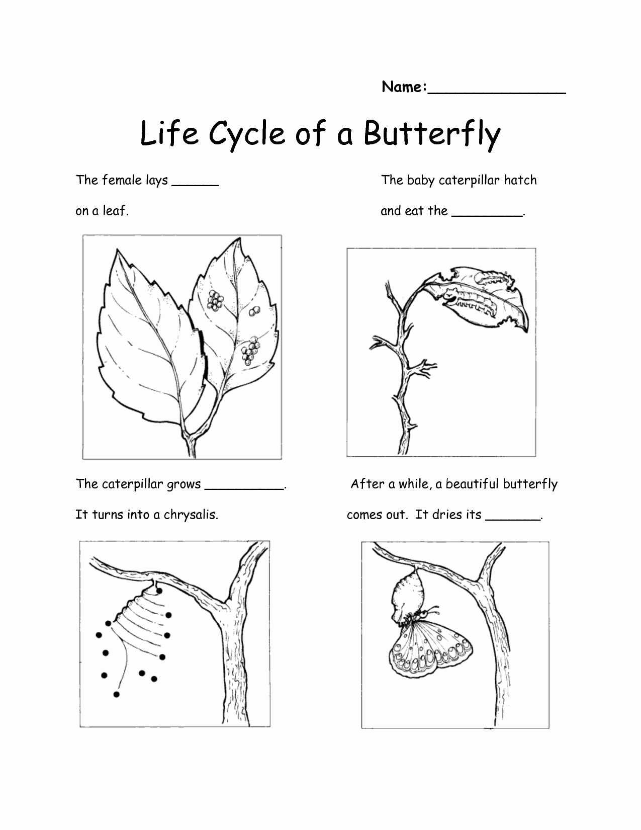 Example Science Worksheets For 2nd Grade Printable